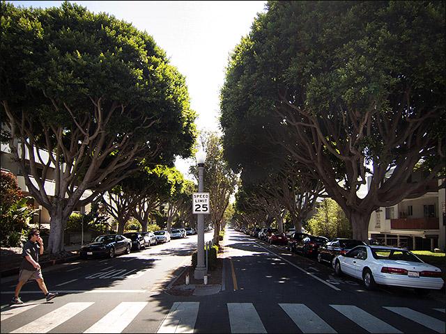 Santa Monica Greenway